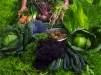 Levering af biodynamiske grøntsager