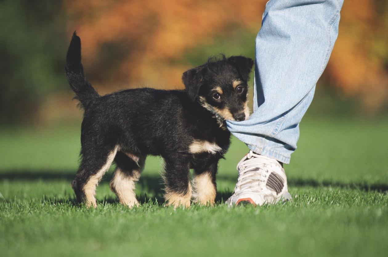 Giv dit kæledyrs gamle legetøj til en ven i nød