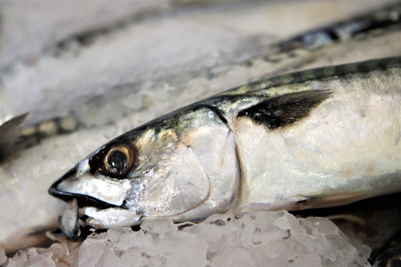 Frisk fisk fra Vesterhavet