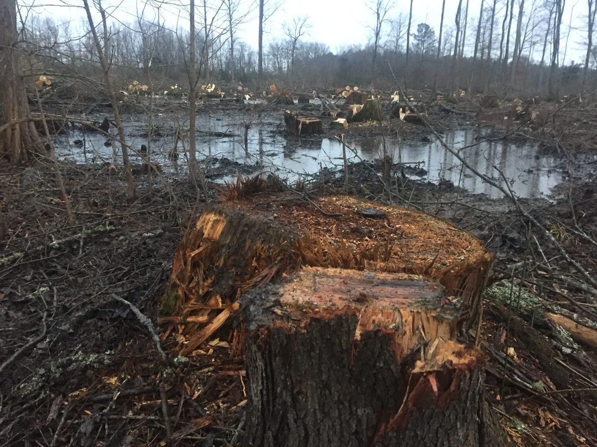 Verdens skove siger nej tak til retroteknologi: Afbrænding af træ