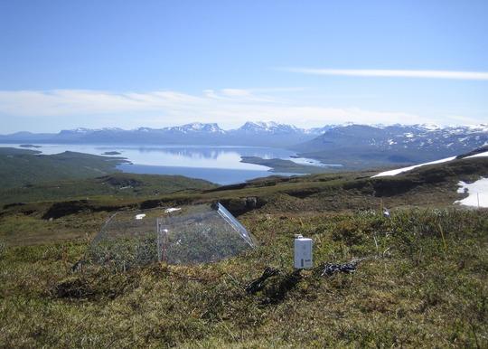 Mosser og træspirer konkurrerer om pladsen i Arktis