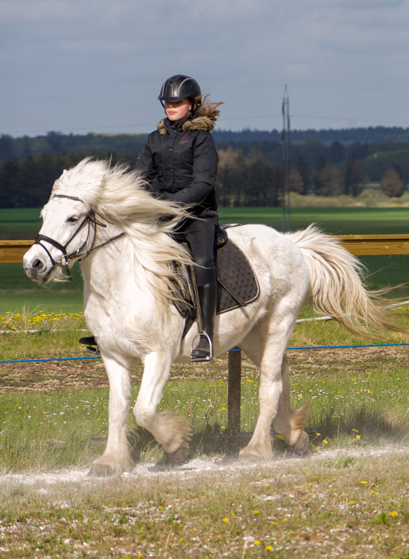 Skrabelodssalg skaffede ny pony til rideskole