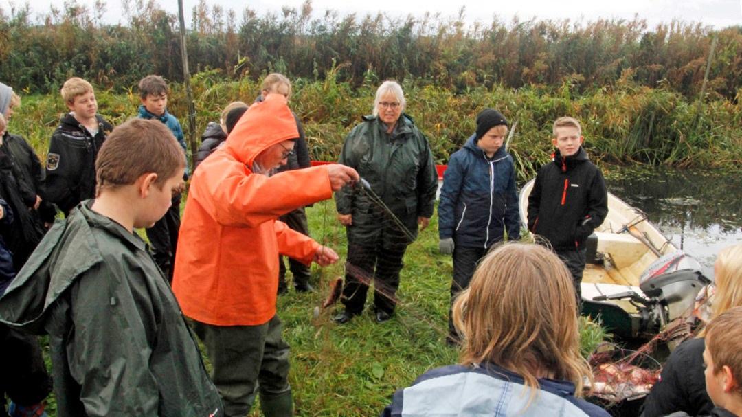 Skoleelever vil have ålen tilbage i Nissum Fjord