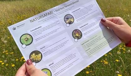 Natursafari i sommerferien: Find 25 farverige, stinkende og smukke arter i den danske natur