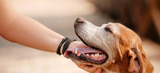 Hundene cementerer deres position som danskernes foretrukne kæledyr